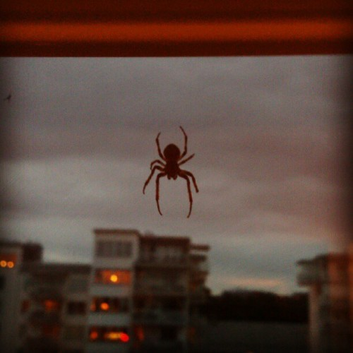 Spider, spider  (Taken with Instagram)