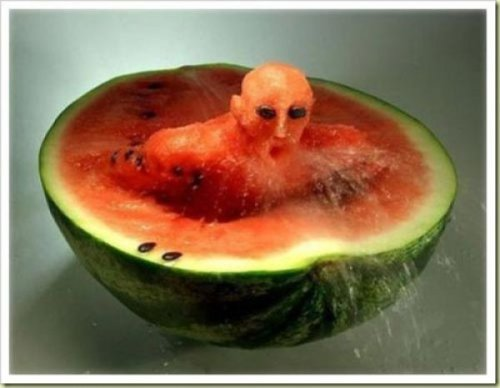 collegehumor:  14 Pictures of Awesome Watermelon Carvings Watermelons are like the Jack-O-Lanterns of the summer, only better, since you can eat your work when you're finished carving a watermelon. Here's 14 amazing pieces of watermelon art.  SHE DID WHAT!?!?!!???!?!!!!?!