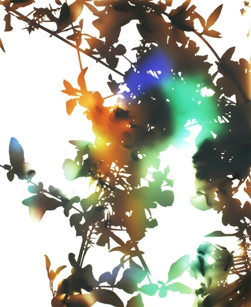 #ReBlogWeekend: museumuesum:  James Welling  Flower 21, 2006 Chromogenic photogram, 37 x46 in.