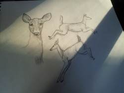 Doe by Mystic-Spiritus. [tumblr]