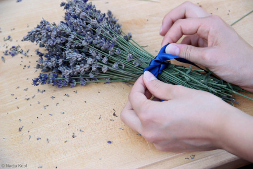 Tying Lavender (by K.Nadja)