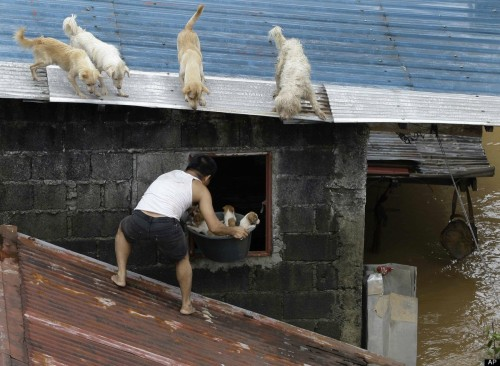 Man rescuing puppies during a flood in the Phillipines.