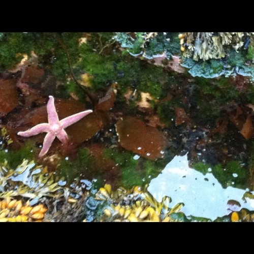 hello mr starfish!  (Taken with Instagram)
