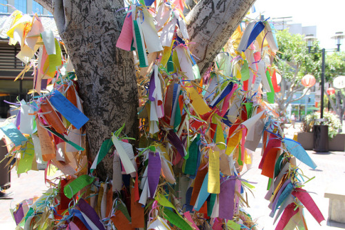 IMG_2340 on Flickr.Wish Tree in Little Tokyo.