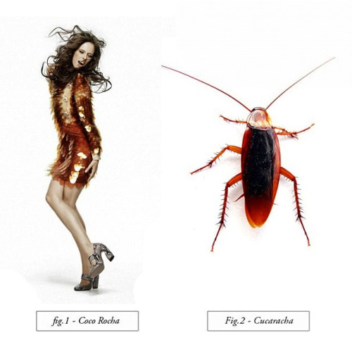 I'm having trouble spotting the difference. #cucaracha #cocorocha