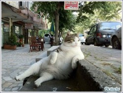 thats-so-true:  pic-stache:  Chillin' Cat http://bit.ly/MkbYja  Follow for the funniest pics on the internet!