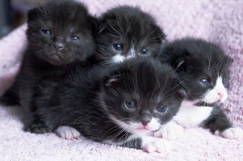 kitties by cloudend31 on Flickr.