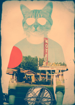 pombomanco:  Cool Cat by Ali GULEC