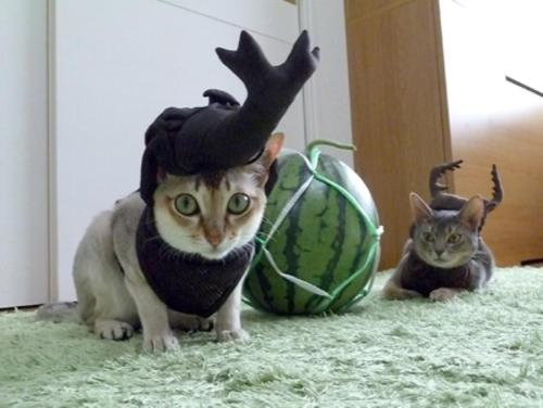 unimpressedcats:  we must protect the melon at all costs