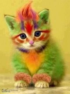 RAINBOW KITTY!!!!! Do u like it? If so repost and heart :).