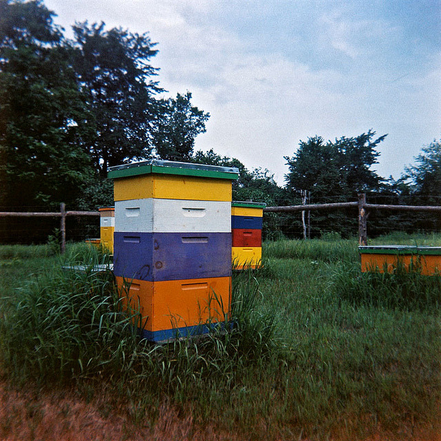 Hives on Flickr.Via Flickr: Windsor, Vermont, July 2012. Marking the return of the Ansco Panda (the most adorable camera ever made ).