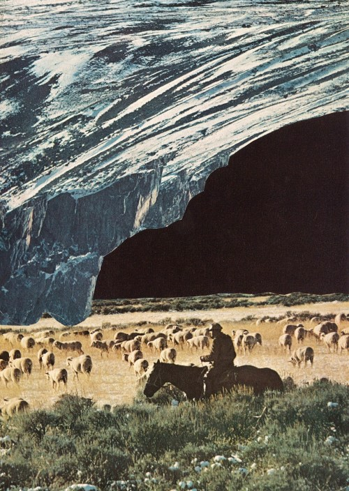 collageartbyjesse:  the last herd www.society6.com/studio/jessetreece/storewww.collageartbyjesse.tumblr.comwww.facebook.com/collageartbyjessewww.twitter.com/jessetreece