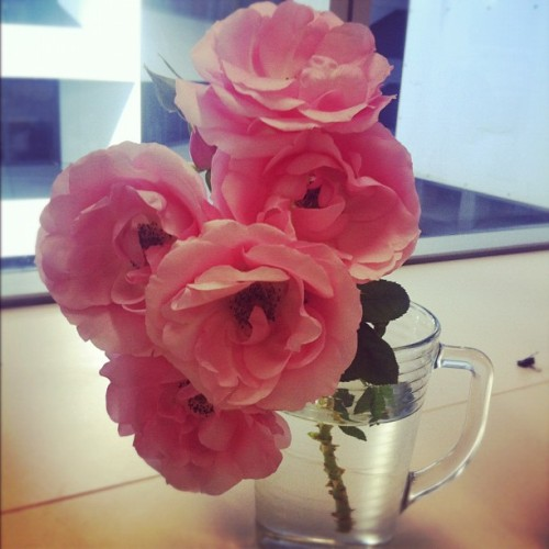 Love getting roses cut fresh from my workmates garden  (Taken with Instagram)