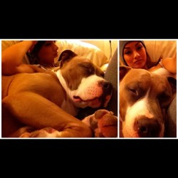 Super mommas boy! #pitbulls #dogsofinstagram #pitty #imalovernotafighter #shoutouts_4_pets #instapaws #instadaily #pitbull #cute #puppy #dogoftheday#pitbullsofinstagram#pitsofig#dontbullymybreed  (Taken with Instagram)