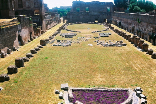 cygnette:  Palatine Hill and the ruins of the palace