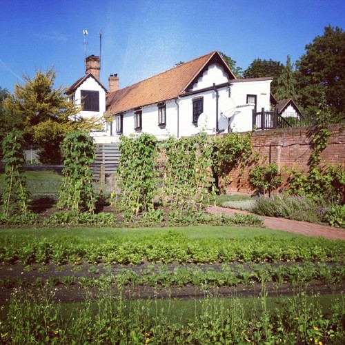 Vegetable garden - I want this (Taken with Instagram at The Olde Bell)