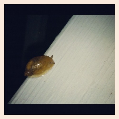 itty bitty lil snail!  (Taken with Instagram)