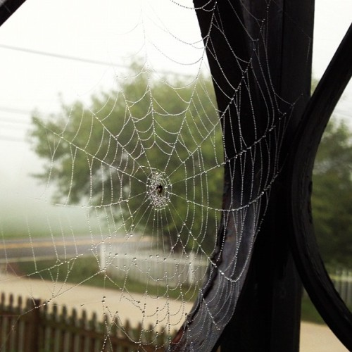 Spider web on a misty morning.  (Taken with Instagram)