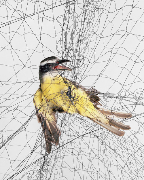 [Harmless] Ornithological Photographs, Todd R. Forsgren