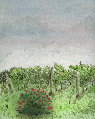 Here's the 8 x 10 watercolor done yesterday at a local vineyard.