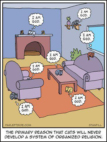 caturday:  Why cats will never have organised religion