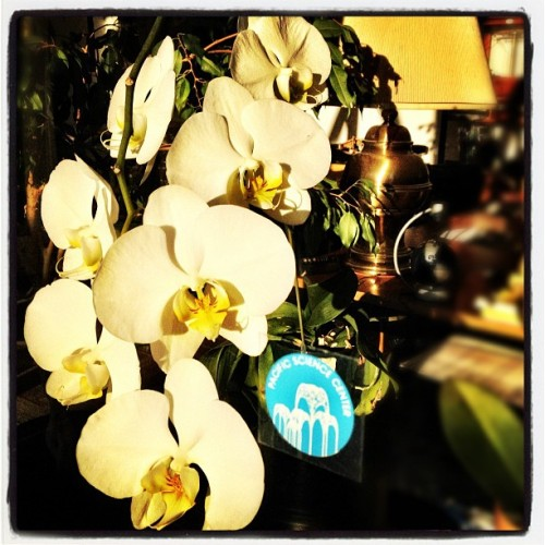 The orchid in our CEO's office in early morning sun.  (Taken with Instagram at Pacific Science Center)