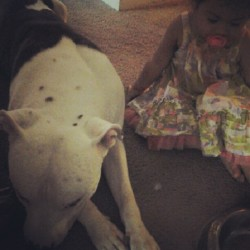 My baby Lilianna and Capone!! #Bestfriends #pitbulls  (Taken with Instagram)