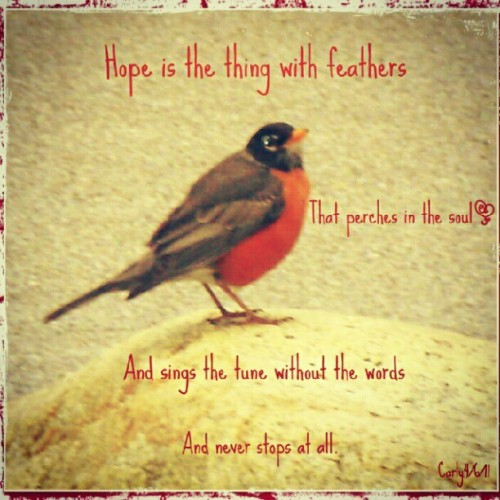 Took this outside of my job.He was so peaceful.#redthursday #bird #nature #myphotos #red #lovely #coloroftheday #fillsmyheartwithhappiness  (Taken with Instagram)