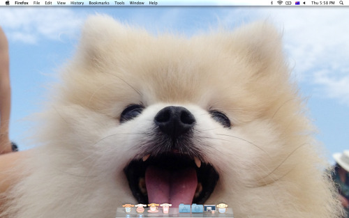 puppysocks:  so, this is my new desktop.  BEST DESKTOP IN THE WORLD!