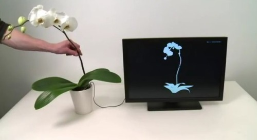 Disney's 'Botanicus Interacticus' turns any plant into an interactive toy Disney Research is no stranger to creating unique touch interfaces, and its latest is able to turn any plant into a multi-touch controller. Dubbed Botanicus Interacticus, the system consists of a single electrode that's placed into the soil, turning an ordinary plant into something much more interactive.