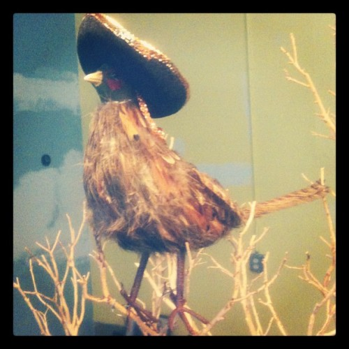 Sombrero bird is our lookout today.  (Taken with Instagram at The Warehouse LA)