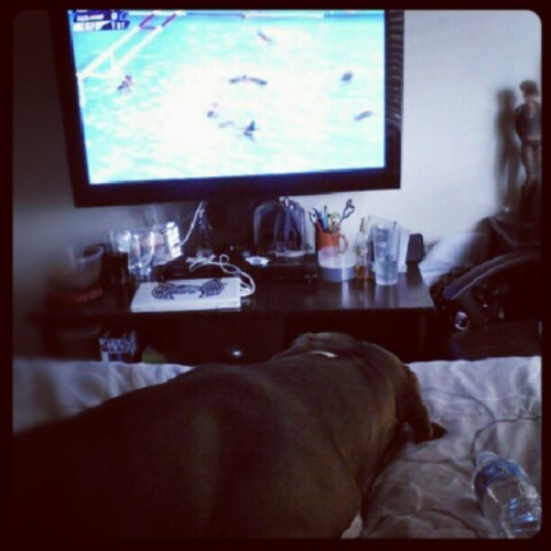 Stayin cool. Watching the Olympics. #pitbull #laziness #watching #2012 #Olympics #staycool (Taken with Instagram)