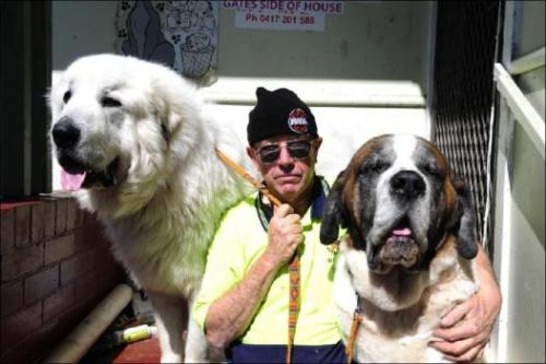 Makes: Great Pyrenees and St Bernard Names: Snowbear and Beethoven Notes: Snowbear weighs 75kg and won't touch canned dog food. He likes chicken and bones.