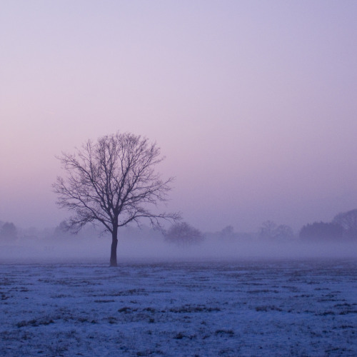 tree at misty winter sunset (by serni)