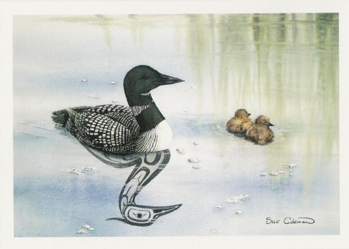 selchieproductions:  Loon and Chicks - Sue Coleman Sue is one of my favourite First Nations artists; mixing highly realistic paintings of Canadian wildlife with stylised animal paintings characteristic of her Haida heritage, she has become one of Canada's most prolific North West Coast Native American artists. If you have some money to spare, feel free to head over to her home page and buy a print or an original here; www.suecoleman.ca
