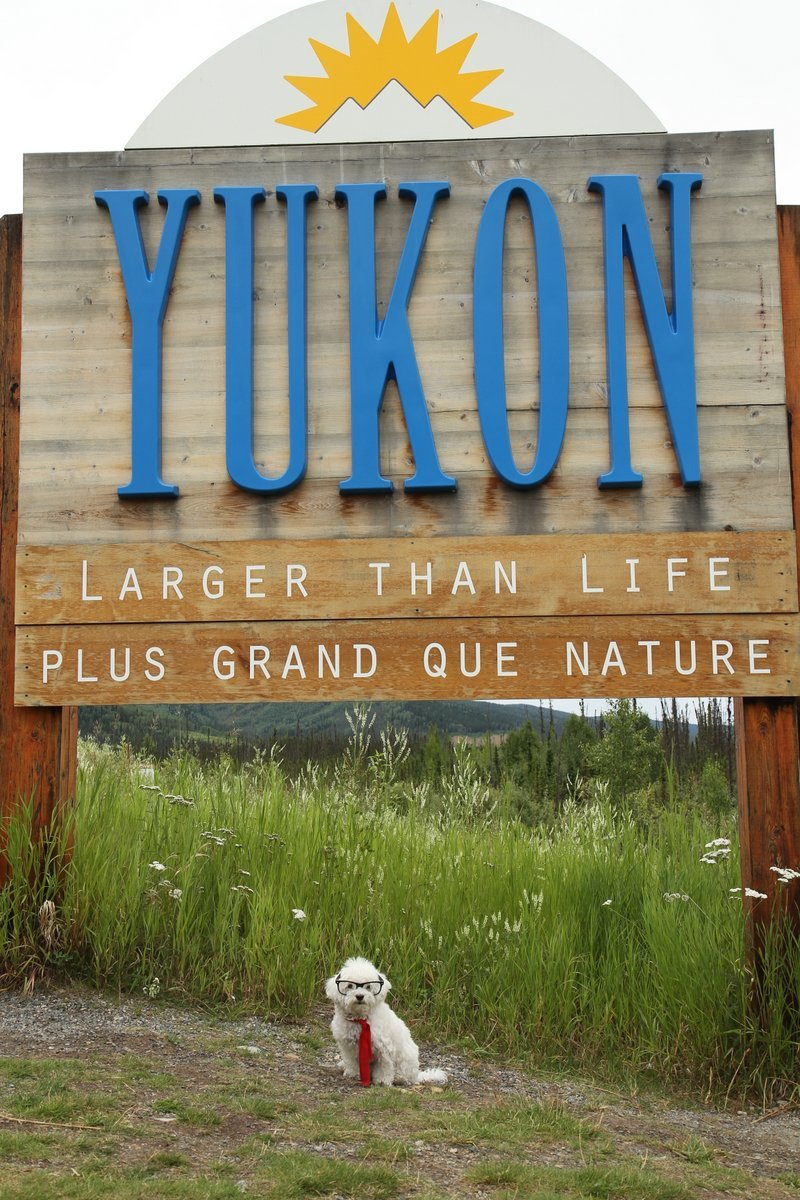 Yukon, larger than life!