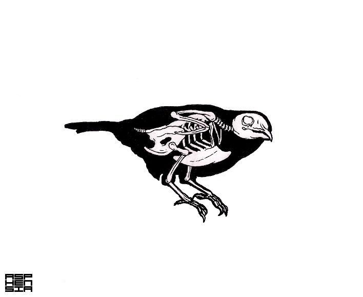 Passerine Bones Birds are one of my favourite classes of animal and to my delight, tiny birds often frequent my garden. This makes me think about Anatomy and Psychology, i find they are two of the most pressing curiosities. All you need you will find inside.