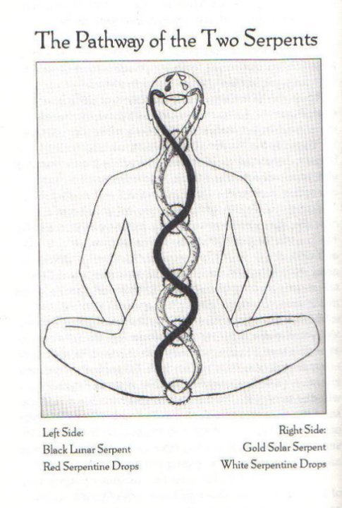 "vae-soli:  KUNDALINI - (Sanskrit kund, ""to burn""; kunda, ""to coil or to spiral"") a concentrated field of intelligent, cosmic invisible energy absolutely vital to life; beginning in the base of the spine when a man or woman begins to evolve as wisdom is earned. Kundalini has been described as liquid fire and liquid light. The ultimate outcome of kundalini is the union of Will (sakti- kundalini),Knowledge {prana-kundalini) and Action (para- kunda)"