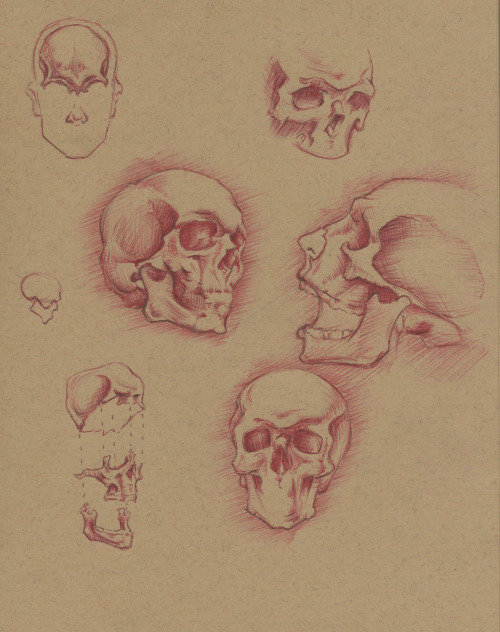 Some really quick skull studies (Peck Anatomy Text) from last night, mostly just for fun/relaxation, something to keep my mind off other things. These are just okay, nothing exciting. That being said, I seem to have a love/hate relationship with ballpoint pens.