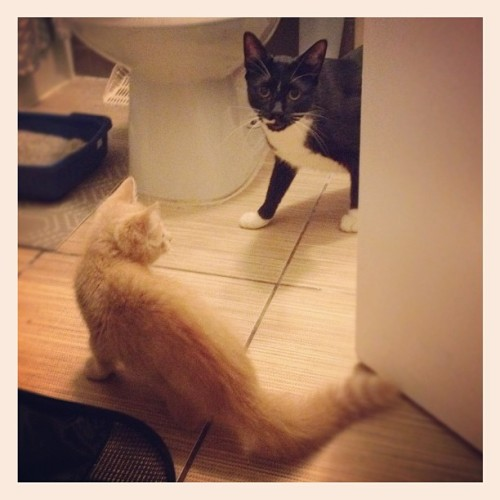 Tiny and Mr. Meowie are having a kitty sleepover! #amazing #meow (Taken with Instagram)