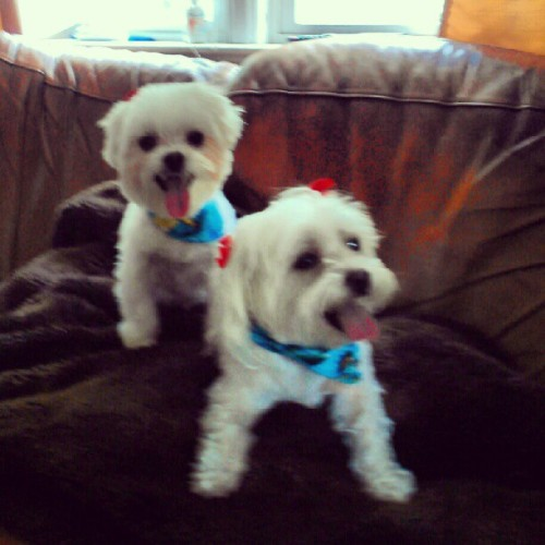 vineripened:  All I do is take pictures of my dogs. (Taken with Instagram)  I'll always reblog Precious #1 and #2.