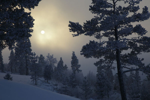 ghost-man-blues:  Winter sun in Sweden
