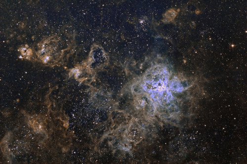 n-a-s-a:  The Cosmic Web of the Tarantula Nebula  Credit & Copyright: Marcelo Salemme