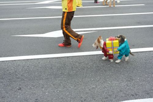 PUAHAH! if i had a dog…i would totally get this for him