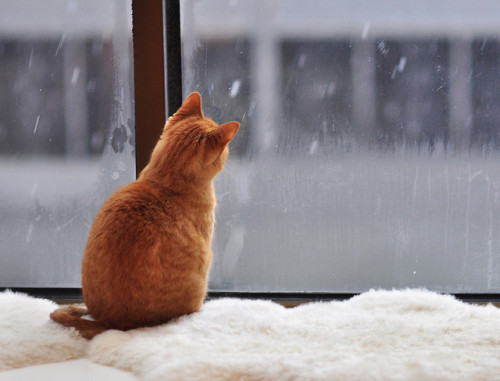 natamare:  I want to join this cat and just stare at the falling snow.