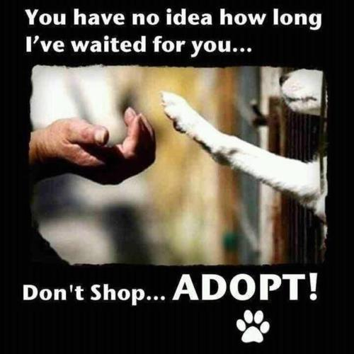 redwingjohnny:  please remember to support your local humane society, spca and animal shelters :) via magicalnaturetour.tumblr.com