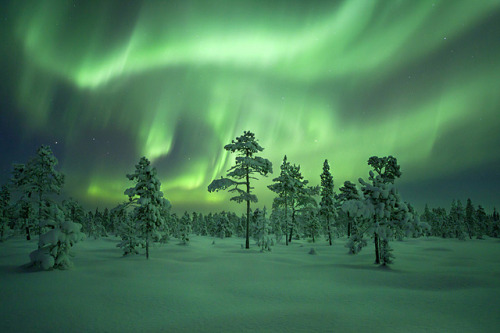 spacettf:  Swedens Frozen Forest by peterspencer49 on Flickr.