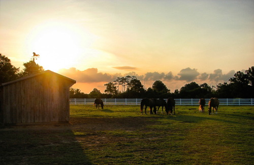fair-winds-and-all-i-see:  Good morning! Sunrise at Fair Winds Farm.