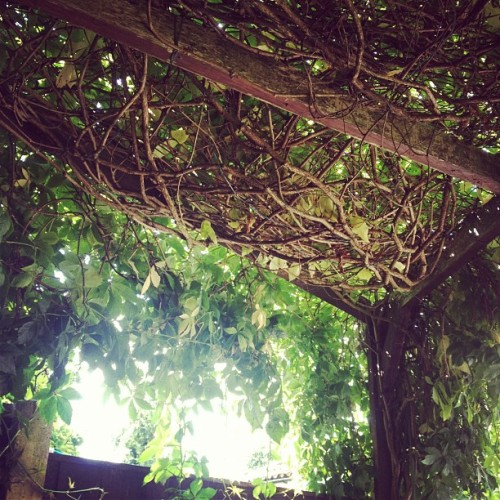 my garden patio thing is amazing (Taken with Instagram)
