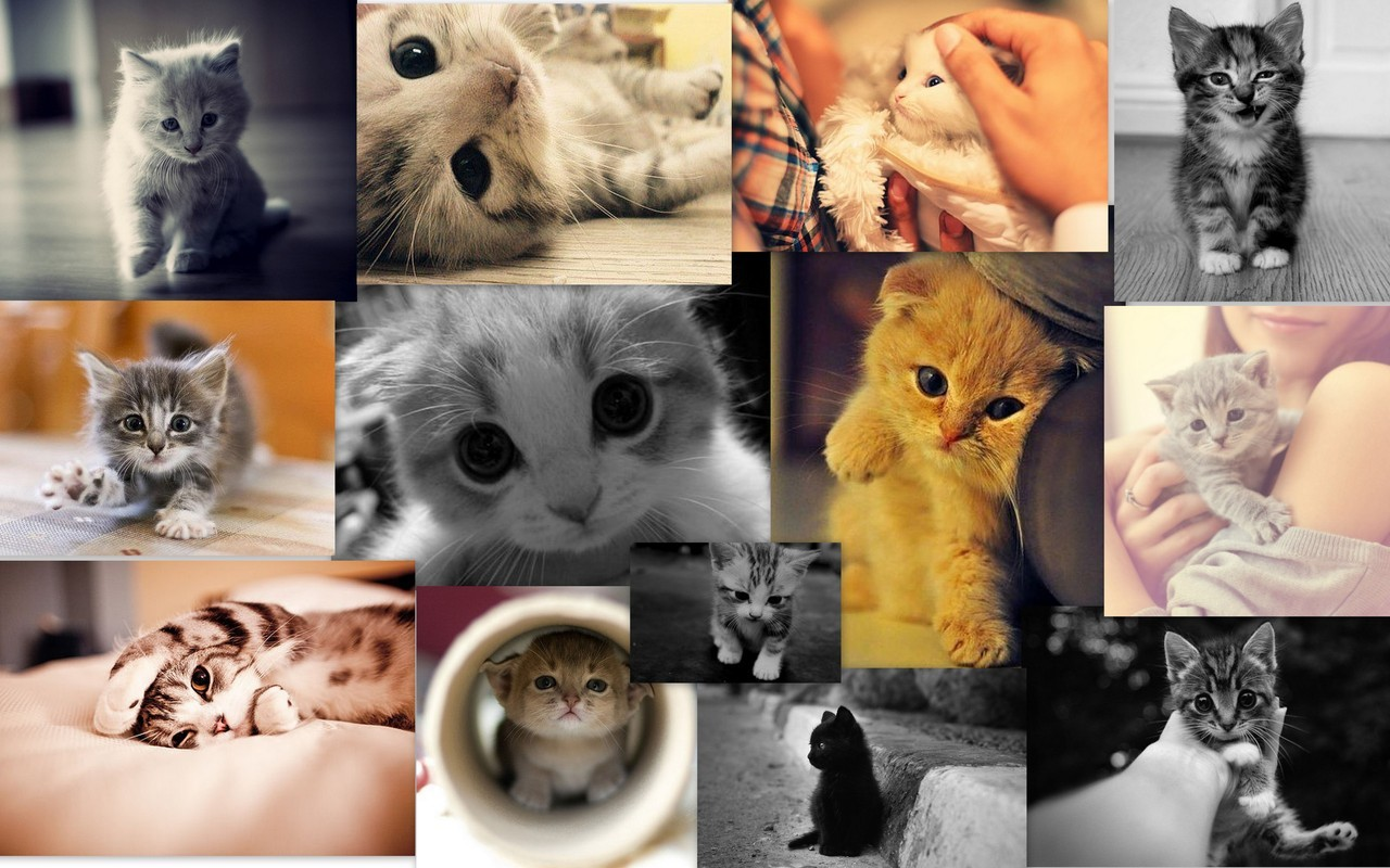 thereallysyamerican:  I love cats :) Or should I say pussy cats :D  #Note. I have another blog too http://lysyamericanjustme.tumblr.com/ follow me there too :D
